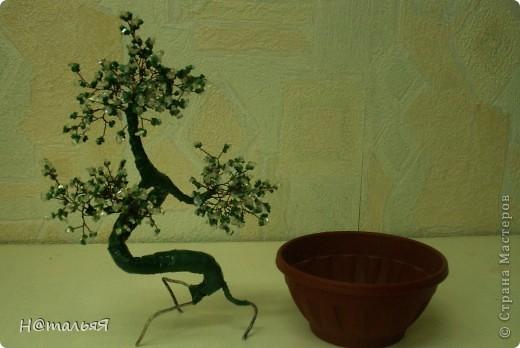 Искусство бонсай в переводе на русский язык означает «дерево в горшке». Возникло это искусство в 200 году до н. э. в Китае, точнее изначально оно звучало как «пан-сан». Несколько веков позднее японцы вместе с буддизмом освоили это искусство, довели его до совершенства и теперь оно считается традиционно японским.    фото 5