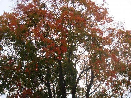 Как хорошо, что у осеннего листочка есть свой праздник! Я очень люблю смотреть, как падают листья, как их кружит ветер. Немного грустно, но очень красиво. Я люблю идти по опавшей листве, слушая, как она шуршит под ногами. Ведь это особый звук осени! Мне очень нравится собирать букеты из осенних листьев. Особенно красивы букеты из кленовых листьев! На кружке я научилась делать кленовые листочки в технике оригами. Пусть мои листочки добавят красок в осенний пейзаж!   фото 5