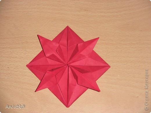 24 декабря не напрасно был выбран  днем Пуансеттии, ведь это Сочельник Рождества на Западе. А как же обойтись без этого прекрасного цветка? фото 5