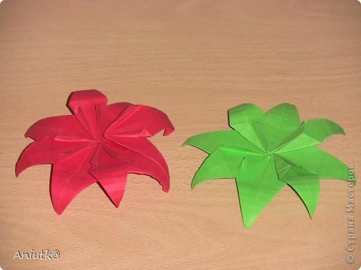 24 декабря не напрасно был выбран  днем Пуансеттии, ведь это Сочельник Рождества на Западе. А как же обойтись без этого прекрасного цветка? фото 7
