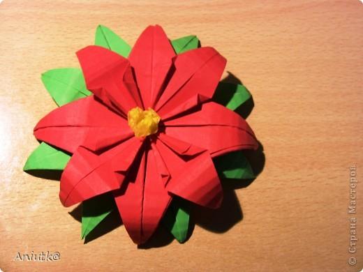 24 декабря не напрасно был выбран  днем Пуансеттии, ведь это Сочельник Рождества на Западе. А как же обойтись без этого прекрасного цветка? фото 8