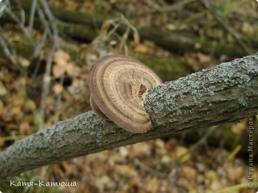 Какой гриб выбрать вкусный или красивый? фото 9