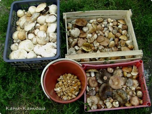 Какой гриб выбрать вкусный или красивый? фото 8