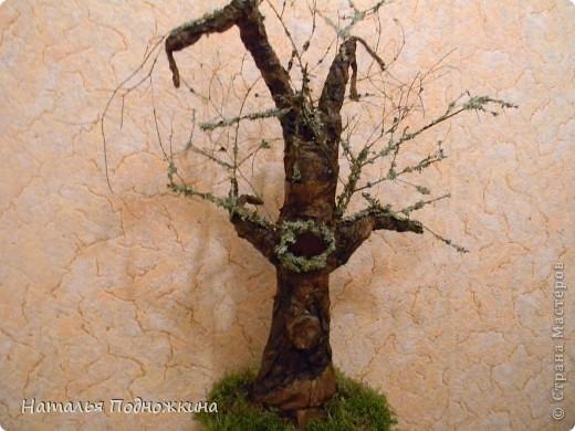 """""""Чудо дерево"""" фото 1"""