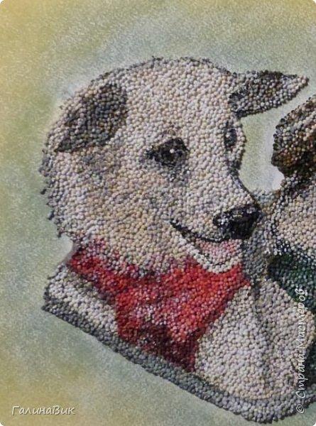 """Советские собаки-космонавты Белка и Стрелка - первые животные, совершившие суточный космический полет, сделав вокруг Земли 17 полных витков на корабле """"Спутник-5"""" 19 августа 1960 г. фото 3"""