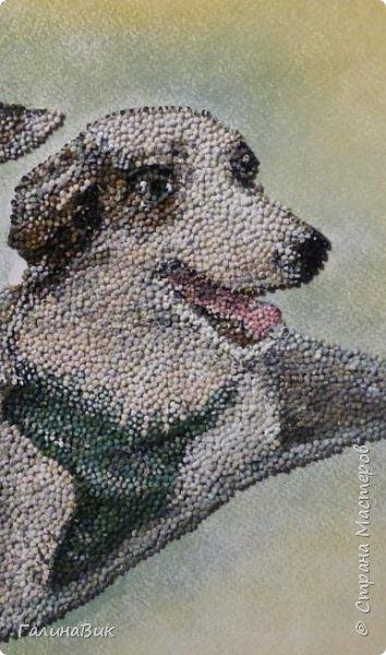 """Советские собаки-космонавты Белка и Стрелка - первые животные, совершившие суточный космический полет, сделав вокруг Земли 17 полных витков на корабле """"Спутник-5"""" 19 августа 1960 г. фото 4"""