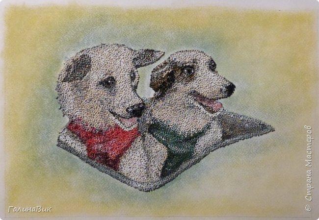 """Советские собаки-космонавты Белка и Стрелка - первые животные, совершившие суточный космический полет, сделав вокруг Земли 17 полных витков на корабле """"Спутник-5"""" 19 августа 1960 г. фото 2"""