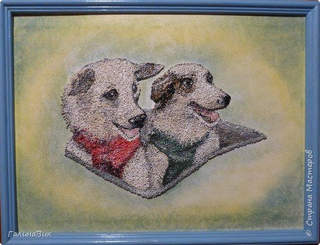 """Советские собаки-космонавты Белка и Стрелка - первые животные, совершившие суточный космический полет, сделав вокруг Земли 17 полных витков на корабле """"Спутник-5"""" 19 августа 1960 г. фото 1"""