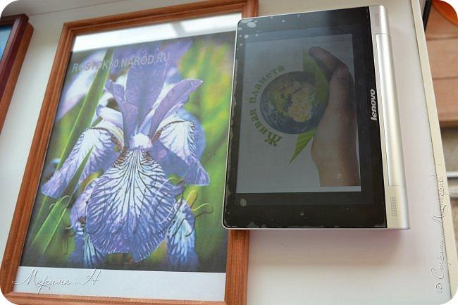 Редкий и уязвимый на территории края вид с обширным ареалом. Многолетнее растение 50-80 см выстой. Корневище с бурыми остатками листьев. Прикорневые листья линейные, длинные. Цветы по 2-3 на верхушках стеблей. Околоцветник темно-синий, с короткой трубкой до 5 см длины, наружные доли отогнуты книзу, в средней части бледно-синий с темными сине-фиолетовыми жилками. Внутренние доли околоцветника более узкие. Коробочка до 2,5 см без носика. Произрастают на лугах низкой и средней поймы. Факторы, влияющие на исчезновение популяции. Хозяйственная деятельность человека, сборы на букеты, весенние палы. Описание взято из Красной книги Алтайского края. фото 3