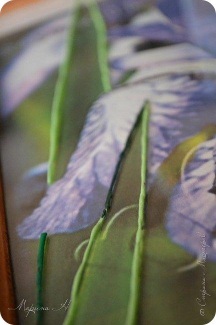 Редкий и уязвимый на территории края вид с обширным ареалом. Многолетнее растение 50-80 см выстой. Корневище с бурыми остатками листьев. Прикорневые листья линейные, длинные. Цветы по 2-3 на верхушках стеблей. Околоцветник темно-синий, с короткой трубкой до 5 см длины, наружные доли отогнуты книзу, в средней части бледно-синий с темными сине-фиолетовыми жилками. Внутренние доли околоцветника более узкие. Коробочка до 2,5 см без носика. Произрастают на лугах низкой и средней поймы. Факторы, влияющие на исчезновение популяции. Хозяйственная деятельность человека, сборы на букеты, весенние палы. Описание взято из Красной книги Алтайского края. фото 5