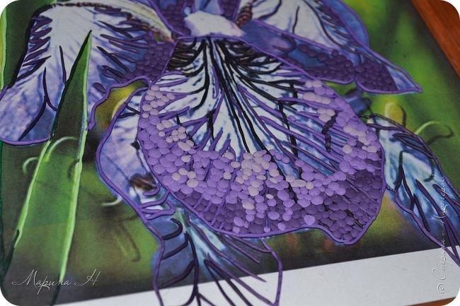 Редкий и уязвимый на территории края вид с обширным ареалом. Многолетнее растение 50-80 см выстой. Корневище с бурыми остатками листьев. Прикорневые листья линейные, длинные. Цветы по 2-3 на верхушках стеблей. Околоцветник темно-синий, с короткой трубкой до 5 см длины, наружные доли отогнуты книзу, в средней части бледно-синий с темными сине-фиолетовыми жилками. Внутренние доли околоцветника более узкие. Коробочка до 2,5 см без носика. Произрастают на лугах низкой и средней поймы. Факторы, влияющие на исчезновение популяции. Хозяйственная деятельность человека, сборы на букеты, весенние палы. Описание взято из Красной книги Алтайского края. фото 6