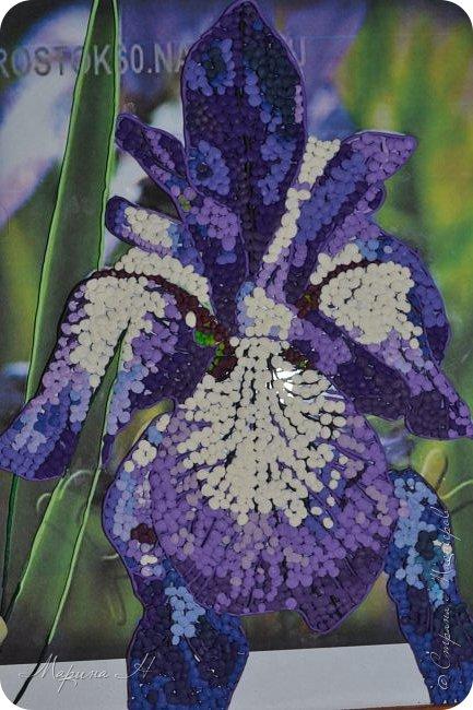 Редкий и уязвимый на территории края вид с обширным ареалом. Многолетнее растение 50-80 см выстой. Корневище с бурыми остатками листьев. Прикорневые листья линейные, длинные. Цветы по 2-3 на верхушках стеблей. Околоцветник темно-синий, с короткой трубкой до 5 см длины, наружные доли отогнуты книзу, в средней части бледно-синий с темными сине-фиолетовыми жилками. Внутренние доли околоцветника более узкие. Коробочка до 2,5 см без носика. Произрастают на лугах низкой и средней поймы. Факторы, влияющие на исчезновение популяции. Хозяйственная деятельность человека, сборы на букеты, весенние палы. Описание взято из Красной книги Алтайского края. фото 10