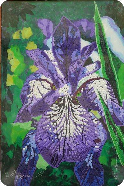 Редкий и уязвимый на территории края вид с обширным ареалом. Многолетнее растение 50-80 см выстой. Корневище с бурыми остатками листьев. Прикорневые листья линейные, длинные. Цветы по 2-3 на верхушках стеблей. Околоцветник темно-синий, с короткой трубкой до 5 см длины, наружные доли отогнуты книзу, в средней части бледно-синий с темными сине-фиолетовыми жилками. Внутренние доли околоцветника более узкие. Коробочка до 2,5 см без носика. Произрастают на лугах низкой и средней поймы. Факторы, влияющие на исчезновение популяции. Хозяйственная деятельность человека, сборы на букеты, весенние палы. Описание взято из Красной книги Алтайского края. фото 15