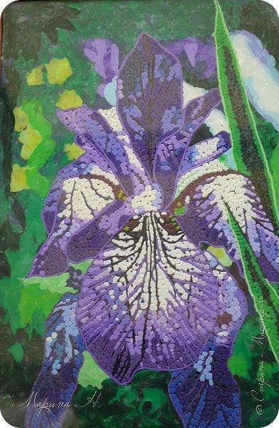 Редкий и уязвимый на территории края вид с обширным ареалом. Многолетнее растение 50-80 см выстой. Корневище с бурыми остатками листьев. Прикорневые листья линейные, длинные. Цветы по 2-3 на верхушках стеблей. Околоцветник темно-синий, с короткой трубкой до 5 см длины, наружные доли отогнуты книзу, в средней части бледно-синий с темными сине-фиолетовыми жилками. Внутренние доли околоцветника более узкие. Коробочка до 2,5 см без носика. Произрастают на лугах низкой и средней поймы. Факторы, влияющие на исчезновение популяции. Хозяйственная деятельность человека, сборы на букеты, весенние палы. Описание взято из Красной книги Алтайского края. фото 1