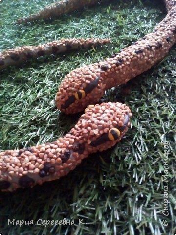 Змея медянка фото 11