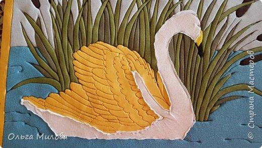Лебедь-кликун. Один из трех видов лебедей, распространенных в фауне России от западных границ до низовьев Анадыря и Сахалина. фото 14