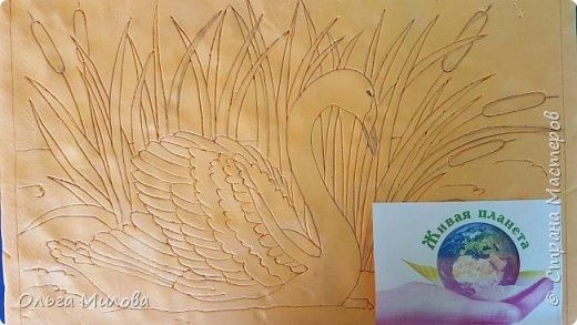 Лебедь-кликун. Один из трех видов лебедей, распространенных в фауне России от западных границ до низовьев Анадыря и Сахалина. фото 3
