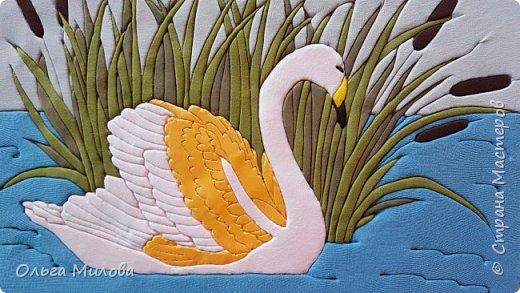 Лебедь-кликун. Один из трех видов лебедей, распространенных в фауне России от западных границ до низовьев Анадыря и Сахалина. фото 22