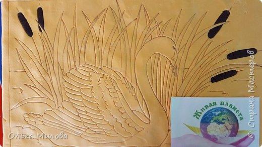Лебедь-кликун. Один из трех видов лебедей, распространенных в фауне России от западных границ до низовьев Анадыря и Сахалина. фото 5