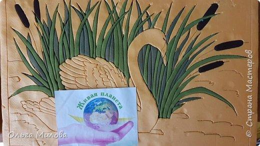 Лебедь-кликун. Один из трех видов лебедей, распространенных в фауне России от западных границ до низовьев Анадыря и Сахалина. фото 8