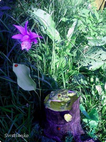 Как только увидела объявление о конкурсе, сразу возникла мысль сделать именно жабу. Да, да, самую что ни на есть обыкновенную камышовую жабу. Всяких мимишных пушистиков на конкурсе будет хватать. И прекрасных бабочек, и сильных тигров и милых тушканчиков. А вот жаба?  Разве нужно ее охранять?    Знакомьтесь - камышовая жаба. Исчезающий вид. Охраняется Бернской Конвенцией (приложение II). Вид занесён в Красные книги России, Беларуси, Латвии, Литвы, Украины и Эстонии. фото 1