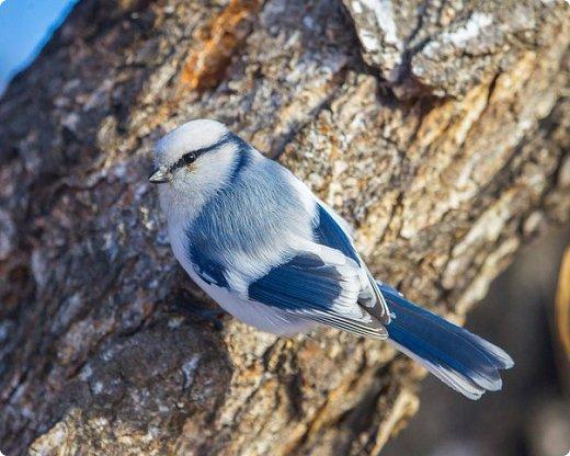 Небольшая простенькая птичка на конкурс:) фото 9