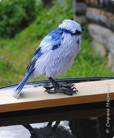 Небольшая простенькая птичка на конкурс:) фото 6