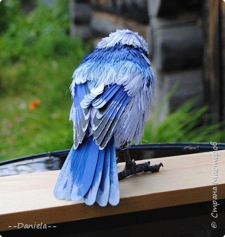 Небольшая простенькая птичка на конкурс:) фото 7