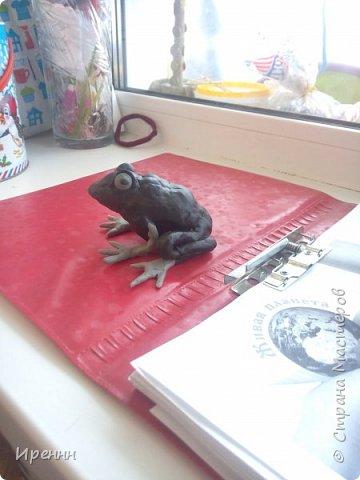 Знакомьтесь, СИБИРСКАЯ (амурская) ЛЯГУШКА. Редкий малочисленный вид. Это самая маленькая из бурых лягушек. фото 7