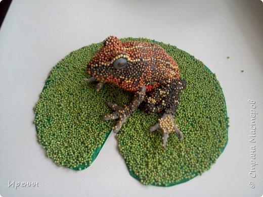 Знакомьтесь, СИБИРСКАЯ (амурская) ЛЯГУШКА. Редкий малочисленный вид. Это самая маленькая из бурых лягушек. фото 12