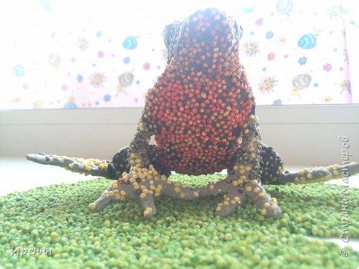 Знакомьтесь, СИБИРСКАЯ (амурская) ЛЯГУШКА. Редкий малочисленный вид. Это самая маленькая из бурых лягушек. фото 13