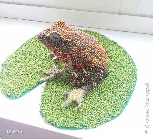 Знакомьтесь, СИБИРСКАЯ (амурская) ЛЯГУШКА. Редкий малочисленный вид. Это самая маленькая из бурых лягушек. фото 1