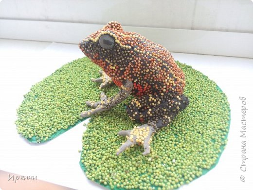 Знакомьтесь, СИБИРСКАЯ (амурская) ЛЯГУШКА. Редкий малочисленный вид. Это самая маленькая из бурых лягушек. фото 14
