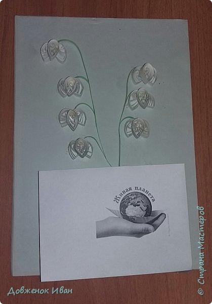 """Многолетнее травянистое растение высотой 15-20 см. От корневища отходят 2, реже 1-3 листа длиной около 20 см и тонкая цветочная стрелка, почти равная по длине листьям, окруженная у основания пленчатыми листочками. Сверху цветочной стрелки однобокой повислой кистью собраны приятно пахнущие белые цветки (5-20 штук), похожие на маленькие шарообразные колокольчики. Плод - красная ягода. Все растение ядовито. Цветет в апреле - июне, плодоносит в августе - сентябре. Ландыш известен с древности как ценное лекарственное растение.  Научное название майского ландыша происходит от греческих слов """"конваллис"""" - долина, """"лирион"""" - лилия и """"майялис"""" - майская, т. е. """"лилия долин, цветущая в мае"""".  Ландыш - любимый цветок многих народов, особенно французов, где в первое, майское воскресенье отмечают праздник ландышей.  Об этом растении сложены легенды. Одна из них рассказывает, как Ландыш влюбился в Весну, а когда она ушла, он горько плакал, и кровь выступила у него из сердца, и окрасила слезы - красные плоды, которые, появляются на стебле после цветения. (http://www.zooclub.ru/flora/lilii/11.shtml)  фото 4"""