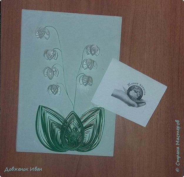 """Многолетнее травянистое растение высотой 15-20 см. От корневища отходят 2, реже 1-3 листа длиной около 20 см и тонкая цветочная стрелка, почти равная по длине листьям, окруженная у основания пленчатыми листочками. Сверху цветочной стрелки однобокой повислой кистью собраны приятно пахнущие белые цветки (5-20 штук), похожие на маленькие шарообразные колокольчики. Плод - красная ягода. Все растение ядовито. Цветет в апреле - июне, плодоносит в августе - сентябре. Ландыш известен с древности как ценное лекарственное растение.  Научное название майского ландыша происходит от греческих слов """"конваллис"""" - долина, """"лирион"""" - лилия и """"майялис"""" - майская, т. е. """"лилия долин, цветущая в мае"""".  Ландыш - любимый цветок многих народов, особенно французов, где в первое, майское воскресенье отмечают праздник ландышей.  Об этом растении сложены легенды. Одна из них рассказывает, как Ландыш влюбился в Весну, а когда она ушла, он горько плакал, и кровь выступила у него из сердца, и окрасила слезы - красные плоды, которые, появляются на стебле после цветения. (http://www.zooclub.ru/flora/lilii/11.shtml)  фото 6"""