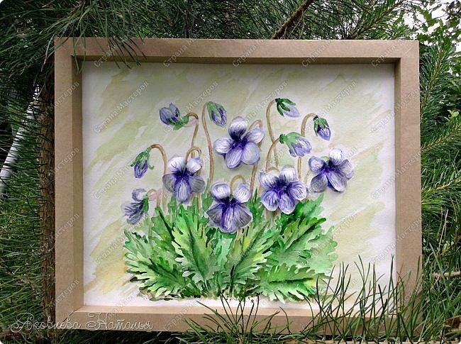 Фиалка надрезанная — один из нежнейших и прекраснейших цветков. Относящаяся к семейству фиалковых, она предпочитает расти на берегах рек, опушках хвойных лесов, каменистых склонах, лугах. Это бесстебельное растение в высоту достигает 3-6 см. Короткие черешки переходят в овальные перистонадрезанные листочки. Цветоносы оснащены узколанцетными прицветниками. Нежные чашелистики имеют эллиптическую форму, шпорец достигает в длину 5 мм, но главное очарование цветка — фиолетовые венчики. Размножается фиалка надрезанная семенами, которые образуются не каждый год. Поэтому неудивительно, что это нежное растение занесено в Красную книгу. http://cicon.ru/viola-incisa.html        фото 1