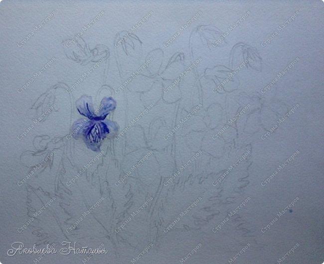 Фиалка надрезанная — один из нежнейших и прекраснейших цветков. Относящаяся к семейству фиалковых, она предпочитает расти на берегах рек, опушках хвойных лесов, каменистых склонах, лугах. Это бесстебельное растение в высоту достигает 3-6 см. Короткие черешки переходят в овальные перистонадрезанные листочки. Цветоносы оснащены узколанцетными прицветниками. Нежные чашелистики имеют эллиптическую форму, шпорец достигает в длину 5 мм, но главное очарование цветка — фиолетовые венчики. Размножается фиалка надрезанная семенами, которые образуются не каждый год. Поэтому неудивительно, что это нежное растение занесено в Красную книгу. http://cicon.ru/viola-incisa.html        фото 9