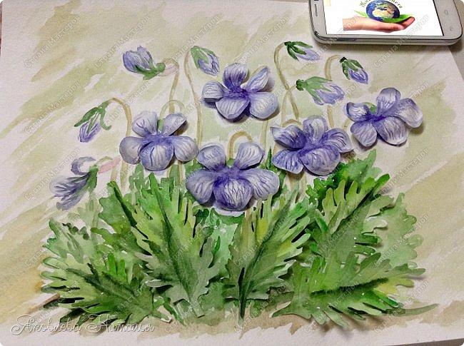 Фиалка надрезанная — один из нежнейших и прекраснейших цветков. Относящаяся к семейству фиалковых, она предпочитает расти на берегах рек, опушках хвойных лесов, каменистых склонах, лугах. Это бесстебельное растение в высоту достигает 3-6 см. Короткие черешки переходят в овальные перистонадрезанные листочки. Цветоносы оснащены узколанцетными прицветниками. Нежные чашелистики имеют эллиптическую форму, шпорец достигает в длину 5 мм, но главное очарование цветка — фиолетовые венчики. Размножается фиалка надрезанная семенами, которые образуются не каждый год. Поэтому неудивительно, что это нежное растение занесено в Красную книгу. http://cicon.ru/viola-incisa.html        фото 17