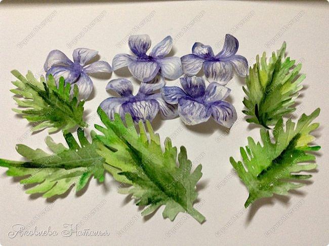Фиалка надрезанная — один из нежнейших и прекраснейших цветков. Относящаяся к семейству фиалковых, она предпочитает расти на берегах рек, опушках хвойных лесов, каменистых склонах, лугах. Это бесстебельное растение в высоту достигает 3-6 см. Короткие черешки переходят в овальные перистонадрезанные листочки. Цветоносы оснащены узколанцетными прицветниками. Нежные чашелистики имеют эллиптическую форму, шпорец достигает в длину 5 мм, но главное очарование цветка — фиолетовые венчики. Размножается фиалка надрезанная семенами, которые образуются не каждый год. Поэтому неудивительно, что это нежное растение занесено в Красную книгу. http://cicon.ru/viola-incisa.html        фото 15