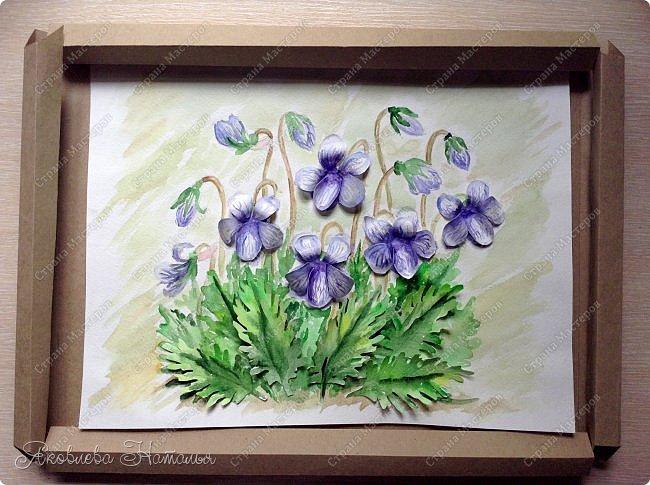 Фиалка надрезанная — один из нежнейших и прекраснейших цветков. Относящаяся к семейству фиалковых, она предпочитает расти на берегах рек, опушках хвойных лесов, каменистых склонах, лугах. Это бесстебельное растение в высоту достигает 3-6 см. Короткие черешки переходят в овальные перистонадрезанные листочки. Цветоносы оснащены узколанцетными прицветниками. Нежные чашелистики имеют эллиптическую форму, шпорец достигает в длину 5 мм, но главное очарование цветка — фиолетовые венчики. Размножается фиалка надрезанная семенами, которые образуются не каждый год. Поэтому неудивительно, что это нежное растение занесено в Красную книгу. http://cicon.ru/viola-incisa.html        фото 20