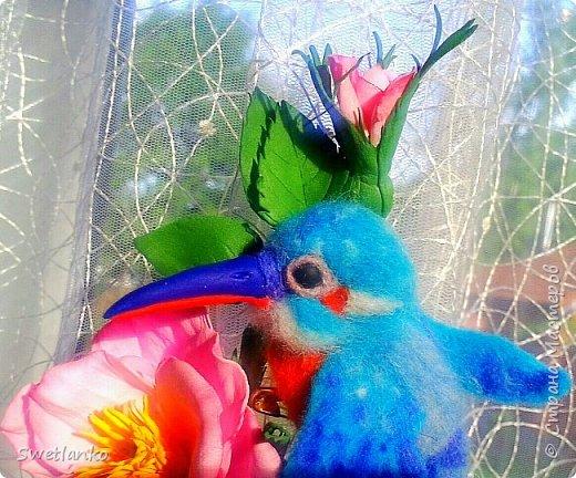 Птица-зимородок упоминается в эпосах разных народов. В итальянском и древнефранцузском языках его название звучит как «райская птица», а английское переводится как «король-рыбак». Немецкое название зимородка – Eisvogel происходит от древнегерманского «isarnovogal» — «железная птица»; скорее всего зимородок получил его за окраску своего оперения, отливающего синим металлическим блеском. Например, в славянских повествованиях, птица-зимородок олицетворяет мифическую птицу Алконост. Эта птица имела женское лицо, а тело птичье, покрытое яркими цветными перьями. Обитала эта птица в славянском раю, называвшемся Ирия. Дословный перевод научного названия, которое еще древние греки дали этой прелестной, с блестящим ярким оперением птичке, означает «приносящая потомство в воде». Волшебная птица эта, по легенде, откладывает яйца на краю моря и не высиживает их, а погружает в воду. И после долго стоит на море тихая безветренная погода, до самого момента вылупления птенцов. Плиний рассказывал что боги, питающие самые нежные чувства к зимородкам, разглаживают на время их насиживания волны, так что морская поверхность в течение 14 дней пребывает в полном покое, гладкая-прегладкая. У древних греков и римлян подобный морской штиль даже носил название «альционовый» (и на самом деле море приблизительно к рождеству на две недели становится удивительно спокойным). А по утверждению Плутарха, самочка зимородка будет повсюду таскать на себе своего постаревшего и ослабевшего супруга, кормить его и заботиться о нем до самой смерти. Латинское название зимородка Alcedo связывают с женщиной по имени Альцион, которая не смогла пережить смерть погибшего в кораблекрушении мужа и, бросившись в море, сама погибла. Боги сжалились над супругами и превратили их в зимородков. В христианстве так же есть легенда о зимородке. Ной после голубя послал зимородка найти землю, но из-за бури тому пришлось подняться высоко в небо. Искупавшись в небесной синеве, он стал из серого голубым. Бесстрашный зимородок взле