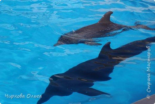 У большинства людей дельфины вызывают чувство необъяснимого восторга, искренности и нежности. Человек, хоть раз увидевший дельфинов, на всю жизнь влюбляется в этих удивительных животных.   фото 5