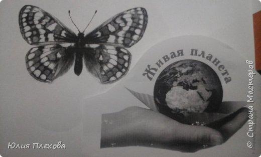 Вот такую бабочку сделали мы с дочкой. Простая в исполнении работа - магнит на холодильник, т.к. трудились вместе с дочкой, которая очень скучала на больничном. Маша - любитель бабочек и божьих коровок, поэтому выбор представителя животного мира был очевиден. Бабочку именно этого вида (а вариантов, которые нам нравились было много) мы решили делать только потому, что у нас нашлись остатки цветного песочка нужных расцветок. А выбирали мы бабочек в Красной книге Республики Коми. Не только потому, что мы живём в этом северном крае. В августе наша республика отмечает большой юбилей - 95 лет! Вот такой привет родному краю у нас получился. фото 4