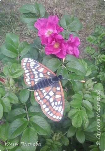 Вот такую бабочку сделали мы с дочкой. Простая в исполнении работа - магнит на холодильник, т.к. трудились вместе с дочкой, которая очень скучала на больничном. Маша - любитель бабочек и божьих коровок, поэтому выбор представителя животного мира был очевиден. Бабочку именно этого вида (а вариантов, которые нам нравились было много) мы решили делать только потому, что у нас нашлись остатки цветного песочка нужных расцветок. А выбирали мы бабочек в Красной книге Республики Коми. Не только потому, что мы живём в этом северном крае. В августе наша республика отмечает большой юбилей - 95 лет! Вот такой привет родному краю у нас получился. фото 1