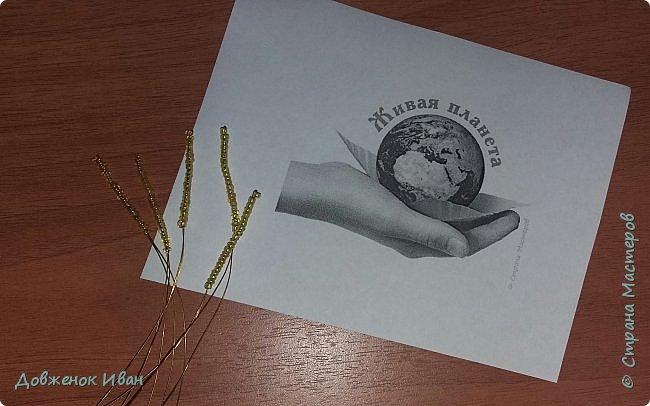 Растение многолетнее.. Луковица сплюснутая, около 1,2 см в диам., состоит из нескольких белых чешуек. Листьев обычно в числе 2–6, линейные, сизоватые, до 15 см дл. и 0,3–0,6 см шир. Отмирают в июне. Цветки одиночные, реже их 2–3, колокольчатые, поникающие, ярко-красно-коричневые, с шахматным рисунком или белые. Цветет в мае – июне. Этот цветок по-научному величают «фритиллярия» или «фритиллария», а шахматную разновидность - Fritillaria meleagris. Такое изысканное название происходит от латинского «fritillus». Распространение. Встречается на территории Майминского и Шебалинского районов. За пределами республики распространен в Алтайском крае, Северо- Восточном Казахстане и Западной Европе [1]. Особенности экологии и фитоценологии. Растет на заболоченных лугах, травяных болотах, реже во влажных лесах и зарослях кустарников. Численность и состояние локальных популяций. В долинах рек Сема, Песчаная и Майма на переувлажненных лугах, образует ранне-весенний аспект [2]. фото 5