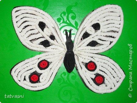 Бабочка Апполон обыкновенный