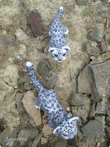 Рассказать хочу вам, всем,  О самой красивой кошке на свете!  Ирбис – кошка снежная,  Учёными мало известная.  Живёт высоко в горах,  Устраивает логово в камнях.  Кошка-ирбис – заботливая мама,  За детьми следит неустанно.  Днём катается с ними с горки,  Ночью их укрывает хвостом в норке.  Не путайте с леопардом и рысью:  У рыси на ушках есть тёмные кисти,  У леопарда цвет шерсти другой,  Снежный барс – совсем не такой!  Шерсть у него длинная, пушистая,  Как ни у одного из хищников.  Цвет шерсти – светло-серый,  По нему чёрные пятна рассеяны.  Лапы массивные, широкие.  Ушки закруглённые, короткие.  Ирбис – барс снежный,  Кстати, довольно-таки любезный.  Если человек ему зла не желает –  На людей он никогда не нападает!  Барс снежный занесён в Красную книгу,  Потому что совсем исчезает из виду.  В России барсов осталось штук двести,  Давайте поможем этим животным вместе.   Автор: Данил Костин, ученик 2 класса  средней школы посёлка Локня Псковской области.      фото 11