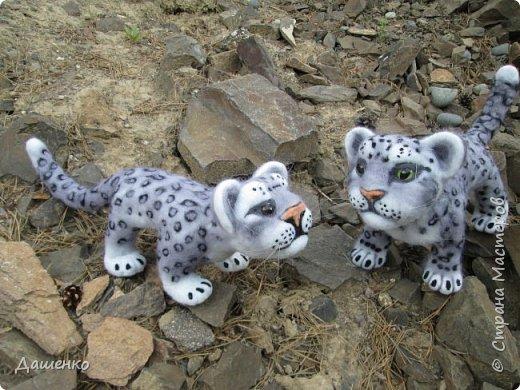 Рассказать хочу вам, всем,  О самой красивой кошке на свете!  Ирбис – кошка снежная,  Учёными мало известная.  Живёт высоко в горах,  Устраивает логово в камнях.  Кошка-ирбис – заботливая мама,  За детьми следит неустанно.  Днём катается с ними с горки,  Ночью их укрывает хвостом в норке.  Не путайте с леопардом и рысью:  У рыси на ушках есть тёмные кисти,  У леопарда цвет шерсти другой,  Снежный барс – совсем не такой!  Шерсть у него длинная, пушистая,  Как ни у одного из хищников.  Цвет шерсти – светло-серый,  По нему чёрные пятна рассеяны.  Лапы массивные, широкие.  Ушки закруглённые, короткие.  Ирбис – барс снежный,  Кстати, довольно-таки любезный.  Если человек ему зла не желает –  На людей он никогда не нападает!  Барс снежный занесён в Красную книгу,  Потому что совсем исчезает из виду.  В России барсов осталось штук двести,  Давайте поможем этим животным вместе.   Автор: Данил Костин, ученик 2 класса  средней школы посёлка Локня Псковской области.      фото 1