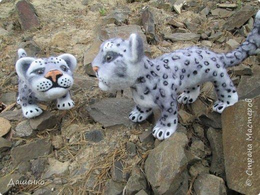 Рассказать хочу вам, всем,  О самой красивой кошке на свете!  Ирбис – кошка снежная,  Учёными мало известная.  Живёт высоко в горах,  Устраивает логово в камнях.  Кошка-ирбис – заботливая мама,  За детьми следит неустанно.  Днём катается с ними с горки,  Ночью их укрывает хвостом в норке.  Не путайте с леопардом и рысью:  У рыси на ушках есть тёмные кисти,  У леопарда цвет шерсти другой,  Снежный барс – совсем не такой!  Шерсть у него длинная, пушистая,  Как ни у одного из хищников.  Цвет шерсти – светло-серый,  По нему чёрные пятна рассеяны.  Лапы массивные, широкие.  Ушки закруглённые, короткие.  Ирбис – барс снежный,  Кстати, довольно-таки любезный.  Если человек ему зла не желает –  На людей он никогда не нападает!  Барс снежный занесён в Красную книгу,  Потому что совсем исчезает из виду.  В России барсов осталось штук двести,  Давайте поможем этим животным вместе.   Автор: Данил Костин, ученик 2 класса  средней школы посёлка Локня Псковской области.      фото 12