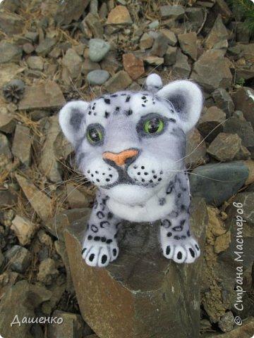 Рассказать хочу вам, всем,  О самой красивой кошке на свете!  Ирбис – кошка снежная,  Учёными мало известная.  Живёт высоко в горах,  Устраивает логово в камнях.  Кошка-ирбис – заботливая мама,  За детьми следит неустанно.  Днём катается с ними с горки,  Ночью их укрывает хвостом в норке.  Не путайте с леопардом и рысью:  У рыси на ушках есть тёмные кисти,  У леопарда цвет шерсти другой,  Снежный барс – совсем не такой!  Шерсть у него длинная, пушистая,  Как ни у одного из хищников.  Цвет шерсти – светло-серый,  По нему чёрные пятна рассеяны.  Лапы массивные, широкие.  Ушки закруглённые, короткие.  Ирбис – барс снежный,  Кстати, довольно-таки любезный.  Если человек ему зла не желает –  На людей он никогда не нападает!  Барс снежный занесён в Красную книгу,  Потому что совсем исчезает из виду.  В России барсов осталось штук двести,  Давайте поможем этим животным вместе.   Автор: Данил Костин, ученик 2 класса  средней школы посёлка Локня Псковской области.      фото 13